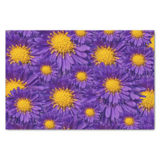 Aster Kickin' Lilac Blue Michaelmas Daisies Tissue Paper