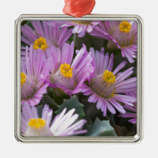 aster Silver-Colored square decoration