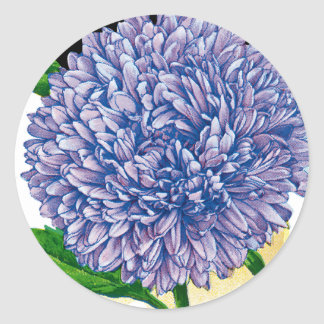 Aster Vintage Seed Packet Round Sticker