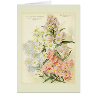 Asters (Michaelmas daisy) Card