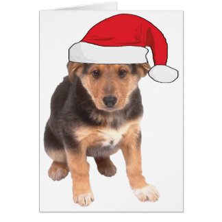 At Christmas - German Shepherd Puppy Greeting Cards