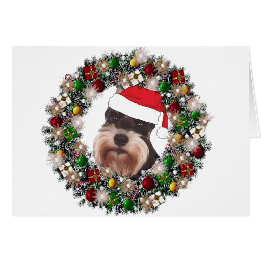 At Christmas - Miniature Schnauzer Greeting Card