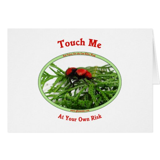 At Your Own Risk Cow Killer Wasp Greeting Cards