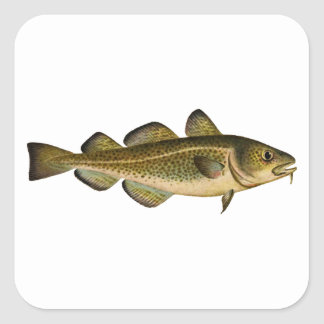 Atlantic Cod Square Sticker