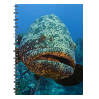 Atlantic Goliath Grouper Spiral Notebook