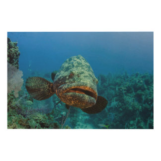 Atlantic Goliath Grouper Wood Canvases