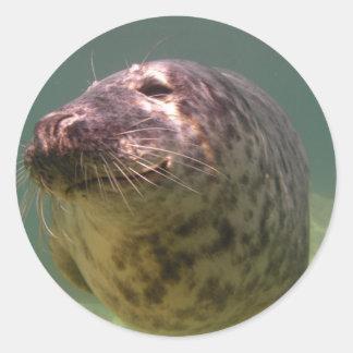 Atlantic Grey Seal Products