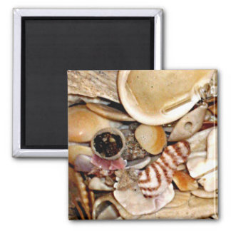 Atlantic Ocean Sea Shells Magnet