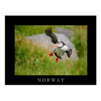 Atlantic Puffin bird flying black border postcard