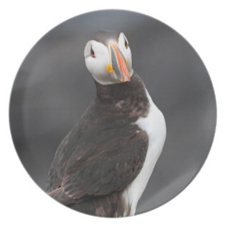 Atlantic Puffin bird plate