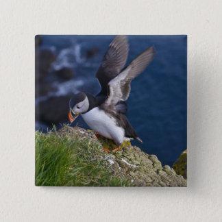 Atlantic Puffin (Fratercula arctica) 2 15 Cm Square Badge