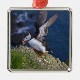 Atlantic Puffin (Fratercula arctica) 2 Christmas Ornament