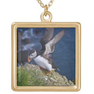 Atlantic Puffin (Fratercula arctica) 2 Gold Plated Necklace