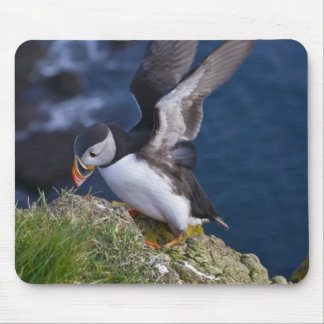 Atlantic Puffin (Fratercula arctica) 2 Mouse Mat