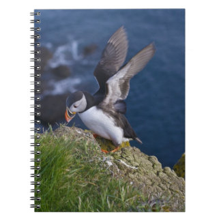 Atlantic Puffin (Fratercula arctica) 2 Notebooks