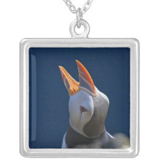 Atlantic Puffin (Fratercula arctica) 3 Silver Plated Necklace