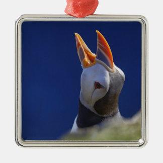 Atlantic Puffin (Fratercula arctica) 4 Christmas Ornament