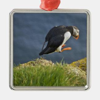 Atlantic Puffin (Fratercula arctica) 5 Christmas Ornament