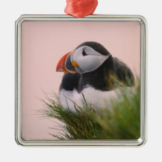 Atlantic Puffin (Fratercula arctica) 6 Christmas Ornament