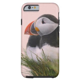 Atlantic Puffin (Fratercula arctica) 6 Tough iPhone 6 Case
