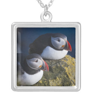 Atlantic Puffin (Fratercula arctica) 7 Silver Plated Necklace