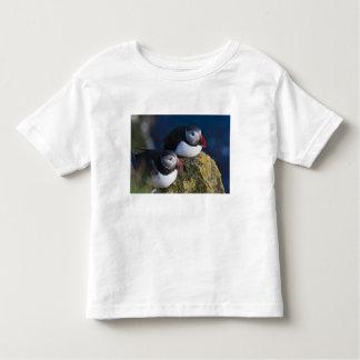 Atlantic Puffin (Fratercula arctica) 7 Toddler T-Shirt