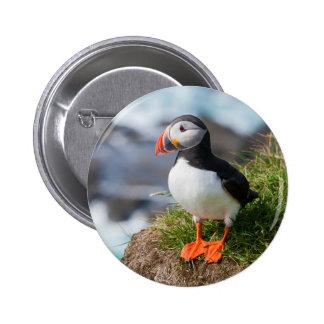 Atlantic Puffin Fratercula Arctica Pinback Buttons