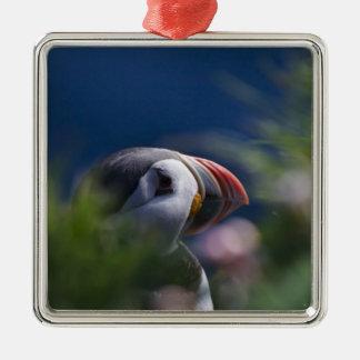 Atlantic Puffin (Fratercula arctica) Christmas Ornament