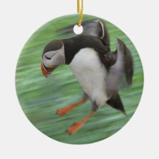 Atlantic Puffin (Fratercula arctica) flying Christmas Ornament