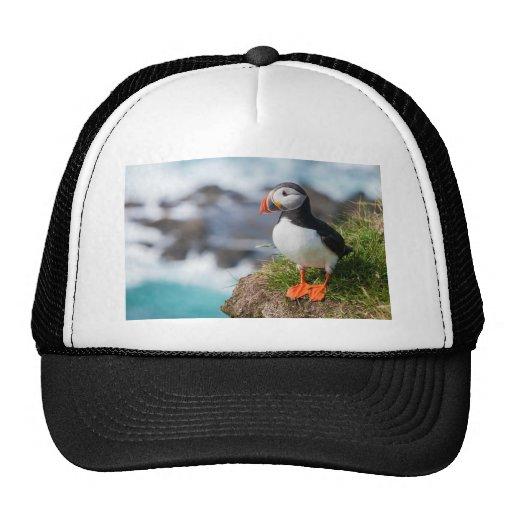 Atlantic Puffin Fratercula Arctica Trucker Hat