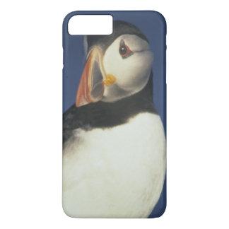 Atlantic Puffin, Fratercula arctica), in iPhone 8 Plus/7 Plus Case