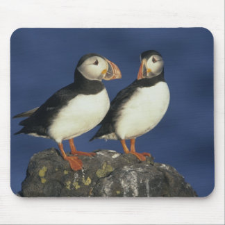 Atlantic Puffin, Fratercula arctica), in Mouse Mat
