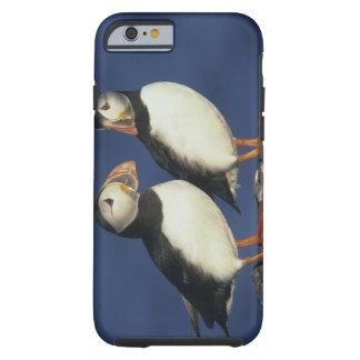 Atlantic Puffin, Fratercula arctica), in Tough iPhone 6 Case