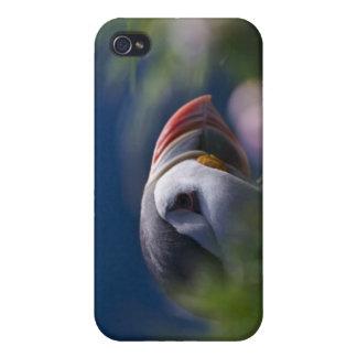 Atlantic Puffin (Fratercula arctica) iPhone 4 Cover