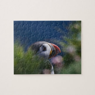 Atlantic Puffin (Fratercula arctica) Jigsaw Puzzle