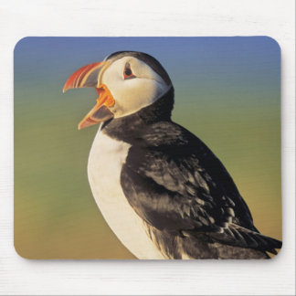Atlantic Puffin (Fratercula Arctica) Mouse Mat