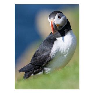 Atlantic Puffin (Fratercula Arctica) On Cliff 2 Postcard