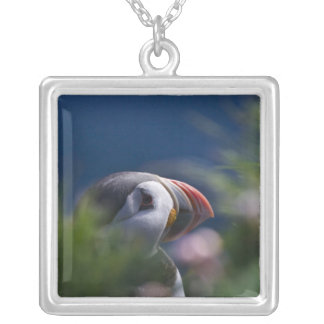 Atlantic Puffin (Fratercula arctica) Silver Plated Necklace