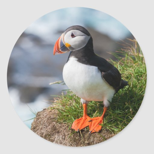 Atlantic Puffin Fratercula Arctica Round Stickers