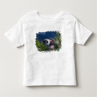 Atlantic Puffin (Fratercula arctica) Toddler T-Shirt