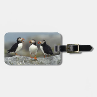 Atlantic Puffin Group Luggage Tag
