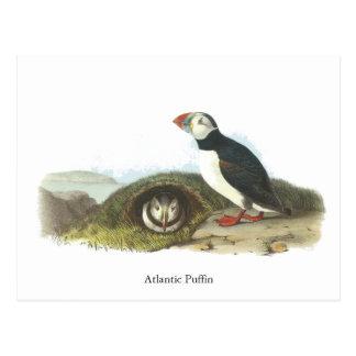 Atlantic Puffin, John Audubon Postcard