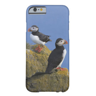 Atlantic Puffins (Fratercula arctica) on cliff Barely There iPhone 6 Case