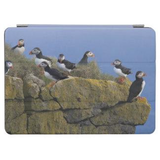 Atlantic Puffins (Fratercula arctica) on cliff iPad Air Cover