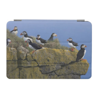 Atlantic Puffins (Fratercula arctica) on cliff iPad Mini Cover
