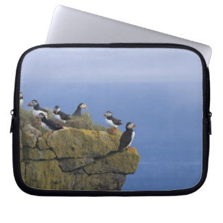 Atlantic Puffins (Fratercula arctica) on cliff Laptop Sleeve
