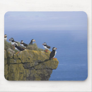 Atlantic Puffins (Fratercula arctica) on cliff Mouse Mat
