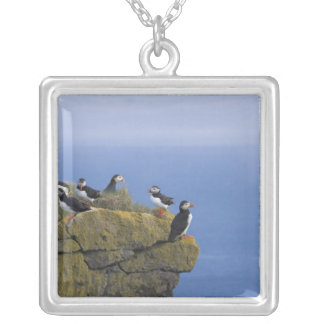 Atlantic Puffins (Fratercula arctica) on cliff Silver Plated Necklace