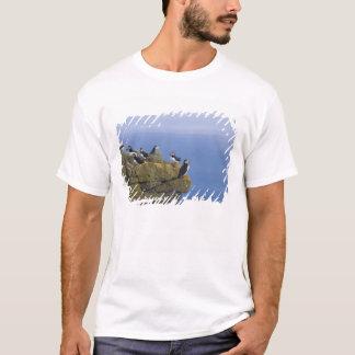 Atlantic Puffins (Fratercula arctica) on cliff T-Shirt