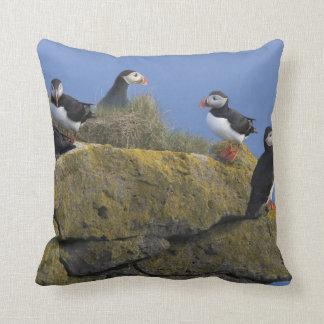 Atlantic Puffins (Fratercula arctica) on cliff Throw Pillow